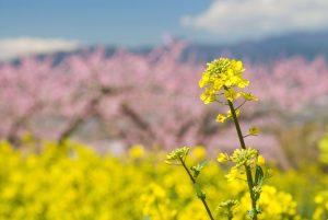 ほっこり癒される花畑